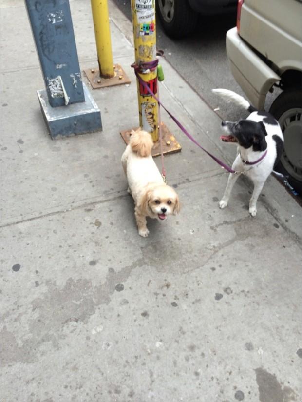 Em breve cachorros poderão sentar-se ao lado dos donos em restaurantes com mesas nas calçadas em Nova York. (Foto: Marcelo Bernardes)