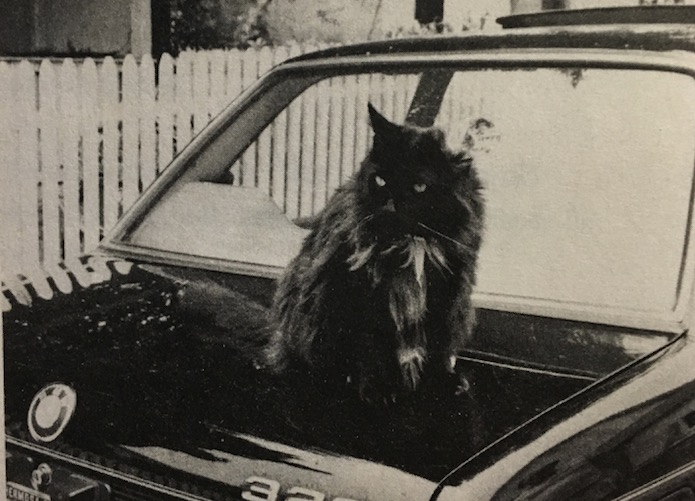 O gato Butch Van Gogh. (Foto: Linda Lee Bukowski)