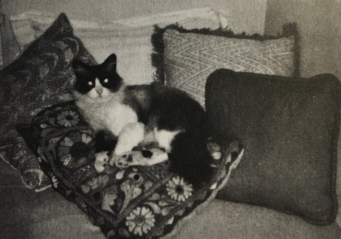O gato Craney. (Foto: Linda Lee Bukowski)