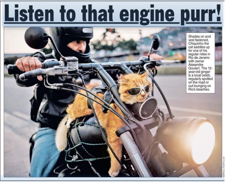 """Gato Chiquinho na edição de hoje (21) do jornal """"The New York Post"""""""
