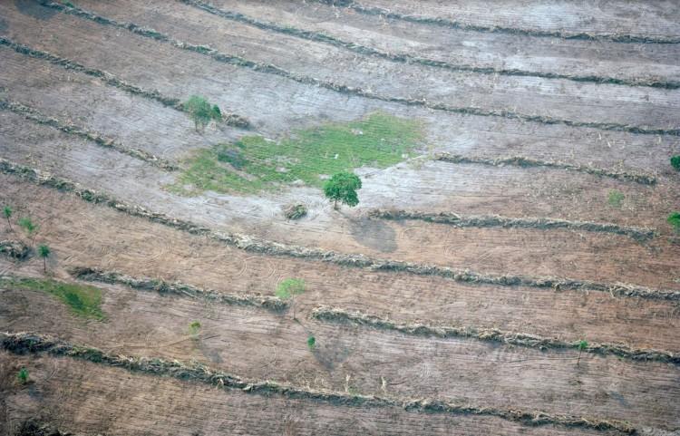 Desmatamento em Mato Grosso. (Foto: Mustafah Abdulaziz)